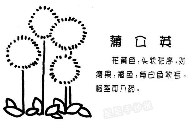 蒲公英简笔画