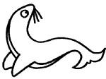 小海狮简笔画
