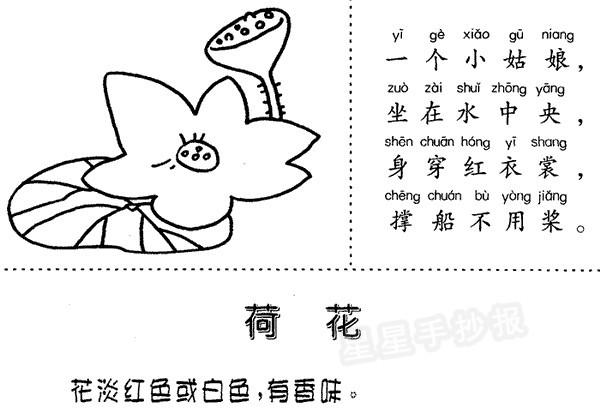 生态小报关于植物_卡通荷花简笔画