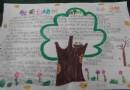 关于杨树手抄报图片、资料