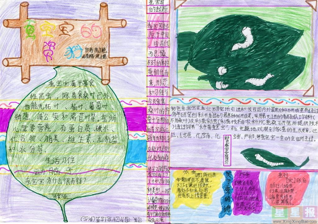 关于蚕的手抄报图片3张