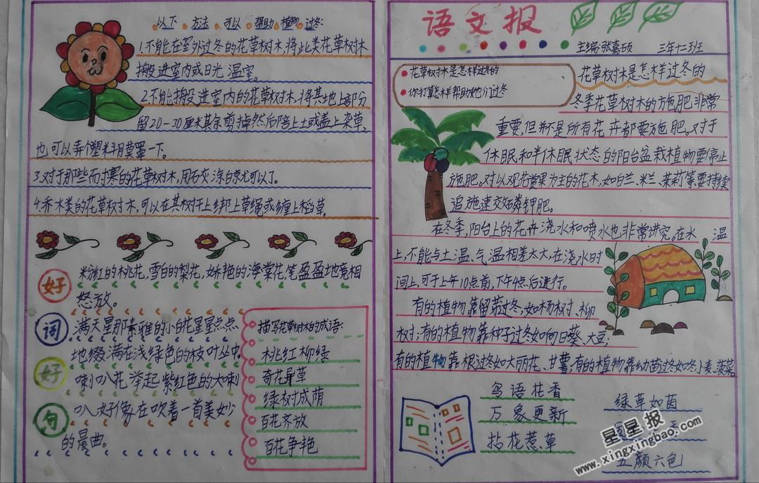 关于花草树木手抄报图片4张